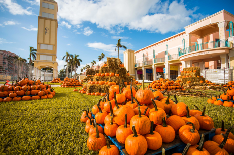 Boca-Pumpkin-Patch-Pumpkin-Picking